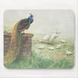 A Blue Peacock and white peahen with chicks Mouse Pad