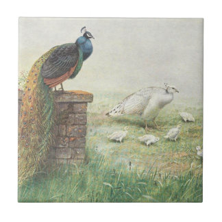 A Blue Peacock and white peahen with chicks Tiles