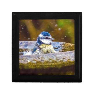 A Blue Tit in the Birdbath Gift Box