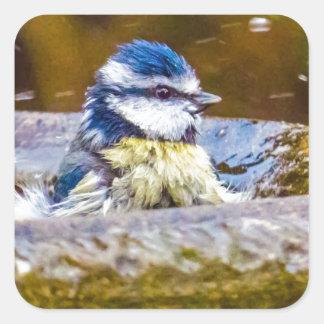 A Blue Tit in the Birdbath Square Sticker
