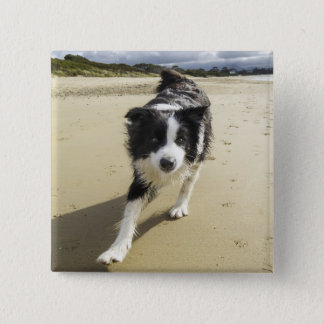 A Border Collie Dog Running On The Beach Button