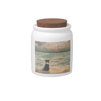 A Border Collie dog says hello to the morning Candy Jars