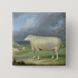 A Border Leicester Ewe (oil on canvas) Button