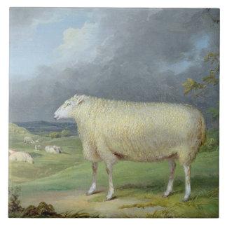 A Border Leicester Ewe (oil on canvas) Ceramic Tile