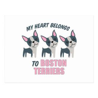 A Boston Terrier Postcard