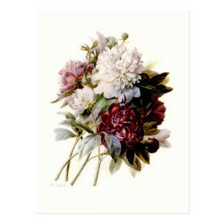 A Bouquet Of Peonies by Pierre-Joseph Redouté Postcard