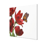 a bouquet of red tulips is visited by a monarch gallery wrapped canvas