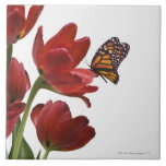a bouquet of red tulips is visited by a monarch tile