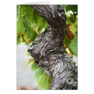 A branch of a very old vine with gnarled greeting card