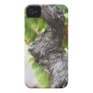 A branch of a very old vine with gnarled iPhone 4 cases