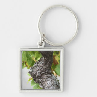 A branch of a very old vine with gnarled keychain