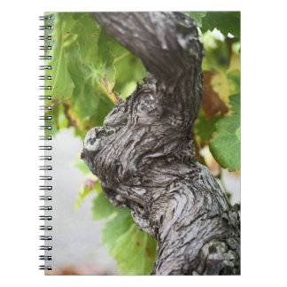 A branch of a very old vine with gnarled note book