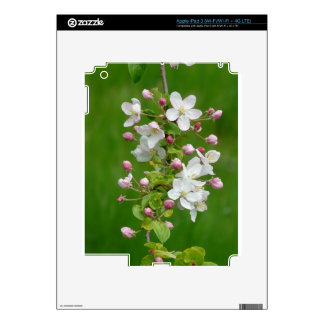 A Branch of Apple Blossom iPad 3 Decal