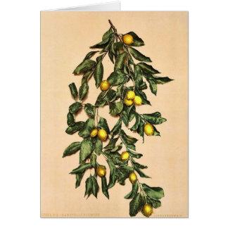A branch of lemons, Limone, Garda, Lake of, Italy Card