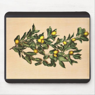 A branch of lemons, Limone, Garda, Lake of, Italy Mouse Pads