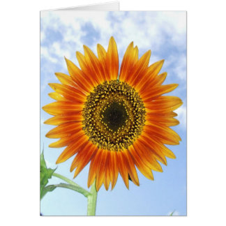A Bright and Sunny Autumn Beauty Sunflower Blossom Card