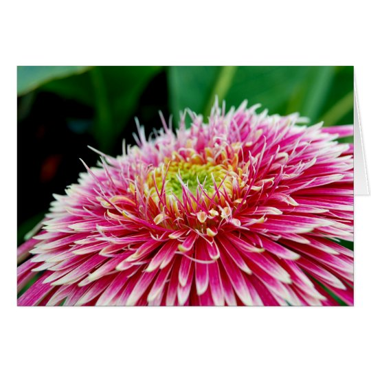 A Bright Pink Dahlia Card