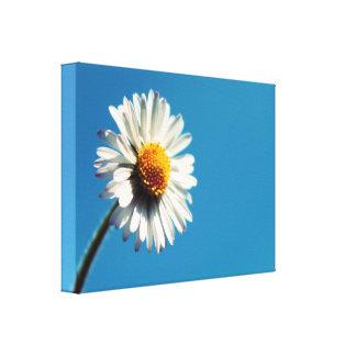 A Bright White Daisy under a Big Blue Sky Canvas Print