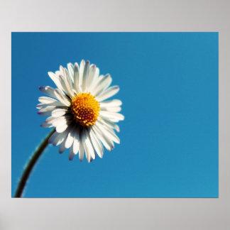 A Bright White Daisy under a Big Blue Sky Poster