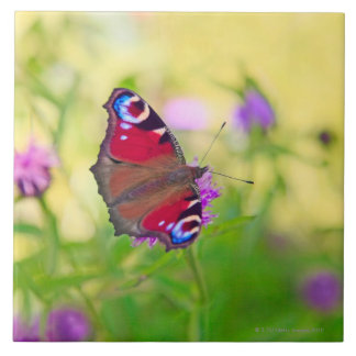 A brightly coloured Peacock butterfly is Ceramic Tile