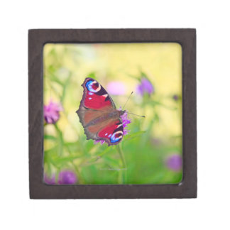 A brightly coloured Peacock butterfly is Gift Box