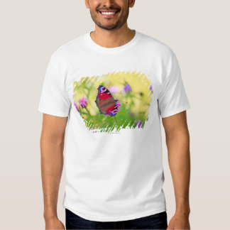 A brightly coloured Peacock butterfly is Shirt