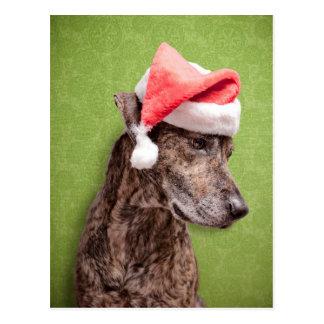 A brindle Boxador wearing a Santa hat Postcard