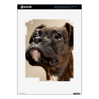 A Brindle Boxer puppy looking up curiously. iPad 3 Decal