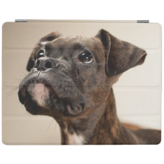 A Brindle Boxer puppy looking up curiously. iPad Smart Cover