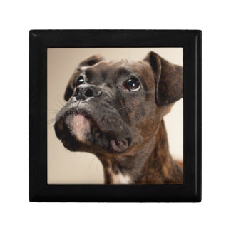 A Brindle Boxer puppy looking up curiously. Jewelry Box