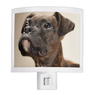 A Brindle Boxer puppy looking up curiously. Night Light