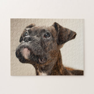 A Brindle Boxer puppy looking up curiously Puzzle