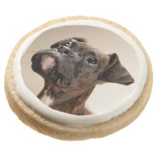 A Brindle Boxer puppy looking up curiously. Round Shortbread Cookie