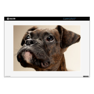 "A Brindle Boxer puppy looking up curiously. Skins For 15"" Laptops"