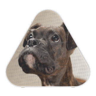 A Brindle Boxer puppy looking up curiously. Speaker