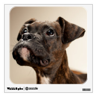 A Brindle Boxer puppy looking up curiously. Wall Decal
