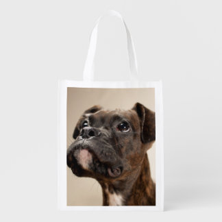 A Brindle Boxer puppy looking up curiously. Market Totes