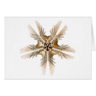 A brittle Star Cards