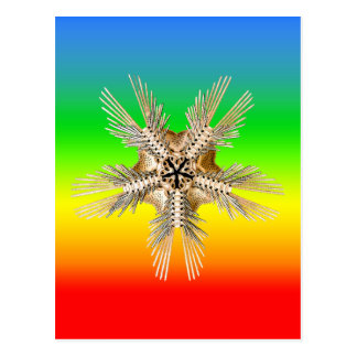 A brittle Star Postcard