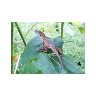 A Brown Anole Lizard Sitting on a Sunflower Leaf Stretched Canvas Prints
