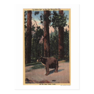 A Brown Bear in the Woods Postcard