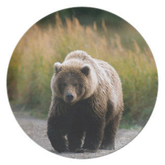 A Brown Bear Walking on a Trail Party Plate