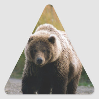 A Brown Bear Walking on a Trail Triangle Sticker