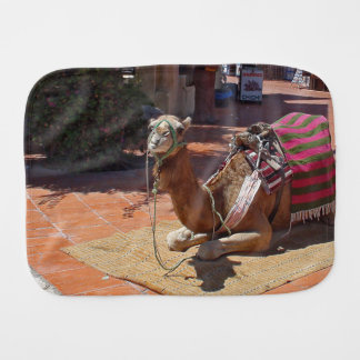 A Brown Camel laying down with Saddle and Blanket