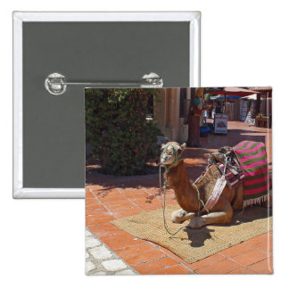 A Brown Camel laying down with Saddle and Blanket Button