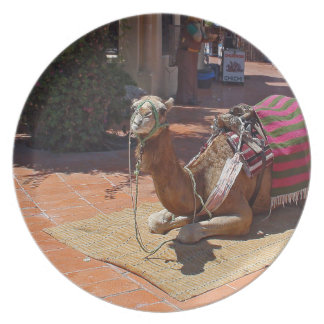 A Brown Camel laying down with Saddle and Blanket Dinner Plate