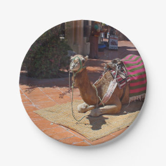 A Brown Camel laying down with Saddle and Blanket Paper Plate