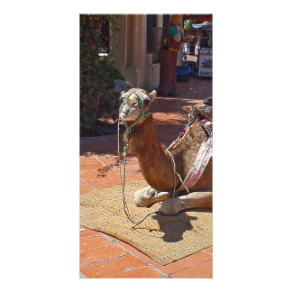 A Brown Camel laying down with Saddle and Blanket Custom Photo Card