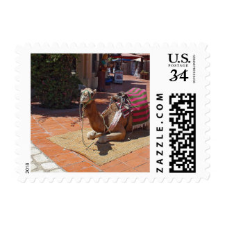 A Brown Camel laying down with Saddle and Blanket Postage