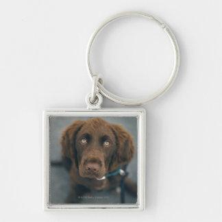 A brown dog. keychain